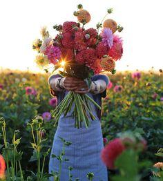 Cut Flower Garden Tips from expert grower Erin Benzakein