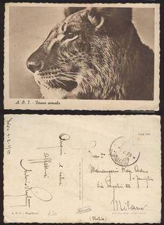 postcard from Somalia - of lion