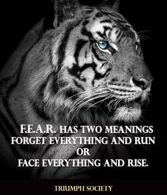 Lioness Quotes, Face Everything And Rise, Bodybuilding Motivation, Transformation Body, Perfect Body, Self Help, Meant To Be, Fitness Motivation, Motivational Quotes