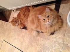 It's my mat Benny! says Jasp