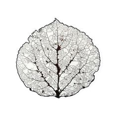 Aspen Leaf Skeleton 1 Print by Agustin Goba