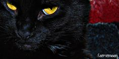 Are You Mocking Me? #cats #blackcats #photography by Clarissa Johal