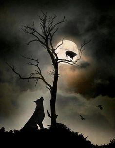 A conversation by moonlight?