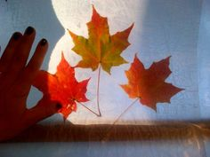Preserve fall leaves with an iron and wax paper! Beautiful to hang in windows...