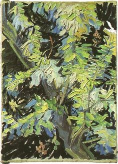 Vincent van Gogh: The Paintings (Blossoming Acacia Branches) 1890