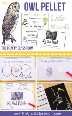 Owl Pellet Lab Booklet for Kids.  Use this free printable science lab when you dissect an owl pellet.  Perfect for young children.