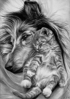 Dog and cat pencil drawing