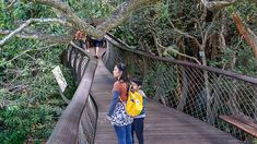 Walking on the boomslang walkway at Kirstenbosch (via Thecoconutrace.com)