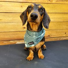Super cute and comfortable dog bandana made by Pebblina. Handmade with a cute honeycomb pattern. Dog Facts, Honeycomb Pattern, Dog Bandana, Bandanas, The Struts, Making Out, Best Dogs, Fashion Accessories, Super Cute