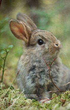 Cute Bunny, Cute Cats, Bunny Bunny, Bunnies, Nature Animals, Animals And Pets, Beautiful Creatures, Animals Beautiful, Cute Baby Animals