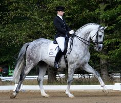 Absolutely love the dressage extended trot ~ and such a gorgeous dappled grey!