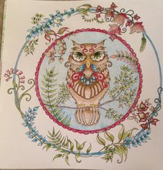 Owl Picture From The Enchanted Forest Coloring Book Johanna Basford