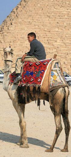 Hoodie Desert Dwelling Mammal Saddle Animal Hoof Humor Funny Camel