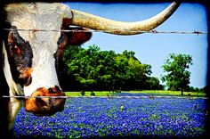 Beauty & the Beast. I wonder if he's thinking of rolling in those Blue Bonnets? I would be.