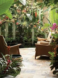 patio  garden tropical  color, whatever those hanging plants and moss are! #TropicalGarden
