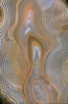 Close-up photograph of finely contoured agate (115571) from the National Mineral Collection. Photo by Chip Clark.