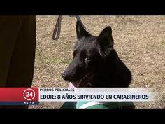 YouTube Chile, Goats, Youtube, Animals, Dogs, Animales, Animaux, Animal, Animais