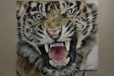 Ritratto di tigre eseguito con matite colorate Prismacolor e Polychromos.  Tigher portrait, draw, colour pencil.