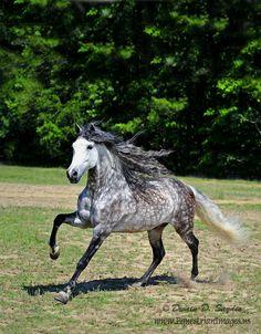 Horse Breeds - Home