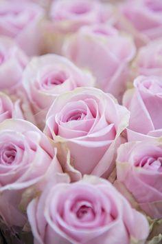 43 Super Ideas For Wallpaper Rose Posts Glitter Wallpaper Bedroom, Rose Gold Marble Wallpaper, Floral Wallpaper Desktop, Wallpaper Tumblr Lockscreen, Iphone Wallpaper Fall, Summer Wallpaper, Rose Wallpaper, Trendy Wallpaper, Pretty Wallpapers