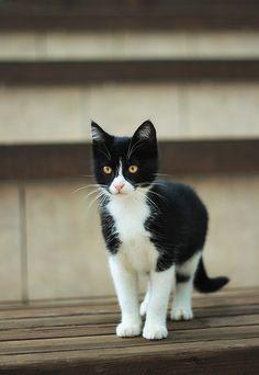 Stray kitten by Thunderi.deviantart.com on @deviantART