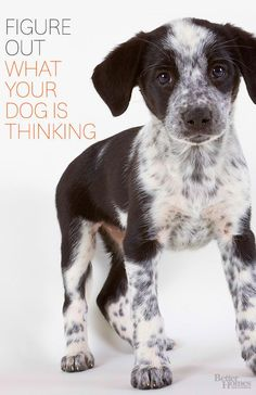 Figure out what Fido is really thinking with our tips here