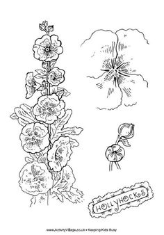 hollyhocks coloring page for fun