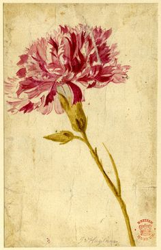 Jan van Huysum Flower Study 18th century