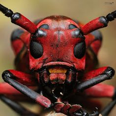 Weird Insects, Bugs And Insects, Foto Macro, Macro Photo, Cool Bugs, Beautiful Bugs, Unusual Animals, Insect Art, Tier Fotos