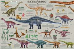Extinct Animals, Prehistoric Animals, Science Chart, Life Science, Dinosaur Posters, Life Poster, Poster Poster, Wall Art Prints, Poster Prints