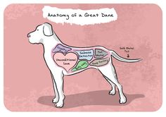 Anatomy of a Great Dane recoloring  #greatdane