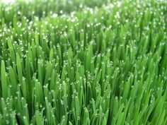 Технология выращивания зеленых кормов