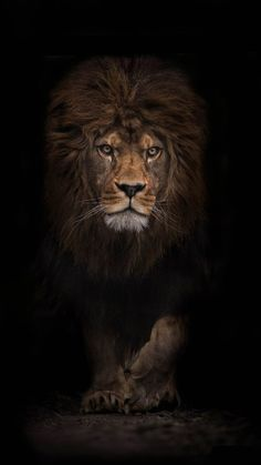 Journeyearth The Survivor By Ashley Vincent