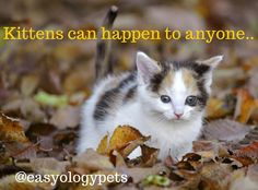 Kittens can happen to anyone! @easyologypets