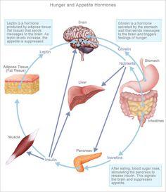 the leptin diet byron richards pdf