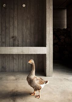 a discrete concrete injection into the agricultural landscape by de amicis architetti I Like Birds, Small Backyard Landscaping, House Landscape, Dezeen, Contemporary Architecture, Color Schemes, Concrete, Photos, Inspiration