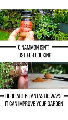 Uses For Cinnamon In The Garden Avocado Dessert, Avocado Toast, Avocado Salad, Cinnamon Uses, Home Vegetable Garden, Organic Gardening Tips, Urban Gardening, Indoor Gardening, Gardening Hacks