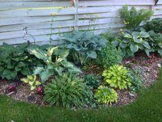 Shade Garden: the diversity in genus Hosta*