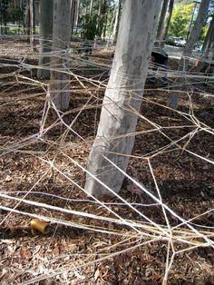 crazy weaving project using eucalyptus trees pined from The Red Thread blog