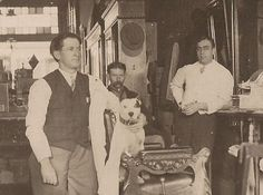 c1910 PIT BULL Terrier in Barber Shop Chair RPPC~Vintage Real Photo DOG Postcard