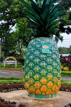 Possibly the biggest Del Monte pineapple?