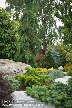 1203737 Dwarf conifers among stones w/ house number [Abies cv.; Juniperus cv.]. Jim Swift, Bellingham, WA. © Mark Turner