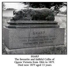 Sharp lived for 15 years. A statue of him stands over his grave in Windsor Home Park, Berkshire, England. After Sharp Queen Victoria was given another collie named Noble. Queen Victoria Family, Queen Victoria Prince Albert, Victoria And Albert, Windsor Homes, Border Collie Art, Pitbulls, British History, Uk History, Asian History