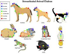 7 Chakra Animal Pet Chart Guide for Reiki Hand by EarthChiJewelry
