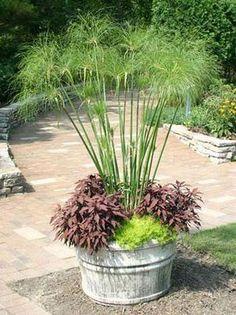 Tropical garden in a pot