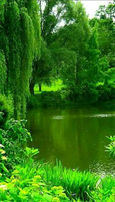Hanging out at the pond catching Polly wogs Beautiful World, Beautiful Gardens, Beautiful Images, Beautiful Nature Wallpaper, Beautiful Landscapes, Landscape Photography, Nature Photography, Photography Jobs, Boudoir Photography