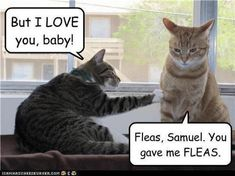 Fleas!!