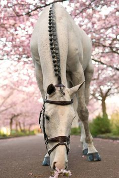 Beautiful horse taking the time to smell the flowers.
