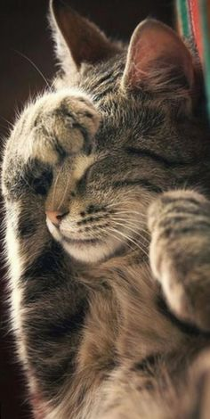 Cute Baby Cats, Cute Cats And Kittens, Cute Funny Animals, Cute Baby Animals, Kittens Cutest, Funny Cats, Funny Horses, Wild Animals, Funny Animal Pictures