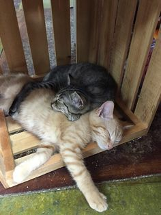 "Note at my local cat shoppe states that these two ""MUST be adopted together. No exceptions."""